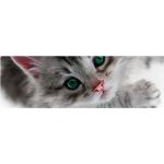 MVDr. Petr Drábek - veterinární ošetřovna – logo společnosti