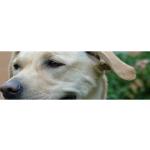 Psí útulek Hodonín – logo společnosti