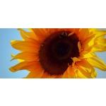 Ráj květin - Eva Divišová – logo společnosti