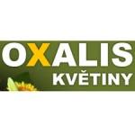 Květiny Oxalis – logo společnosti