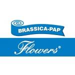 BRASSICA-PAP, spol. s r.o. – logo společnosti