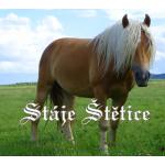 Stáje Štětice – logo společnosti